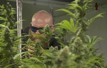 A factory tour with a Colorado cannabis CEO