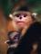 snub-nosed-monkeys-shen-cheng-16.jpg