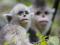 snub-nosed-monkeys-jacky-poon-promo-6880.jpg