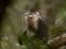 snub-nosed-monkeys-xi28.jpg