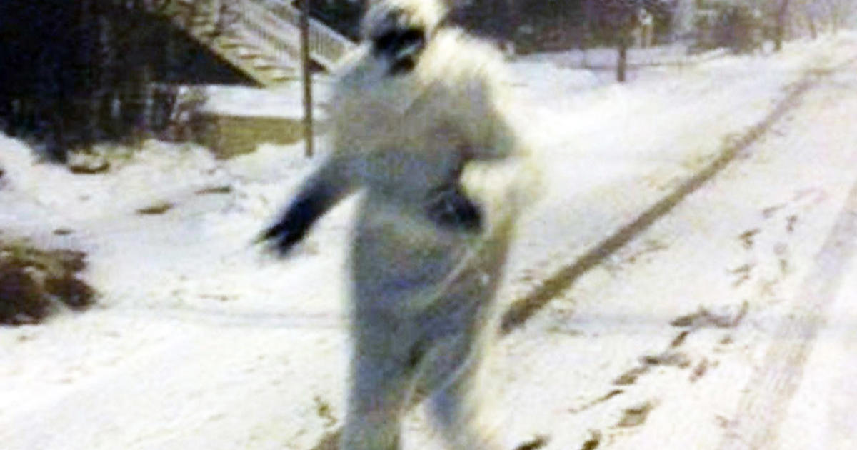 yeti spotted roaming streets of boston
