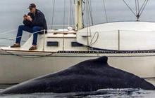 Get off your phone! Man misses amazing humpback whale sight