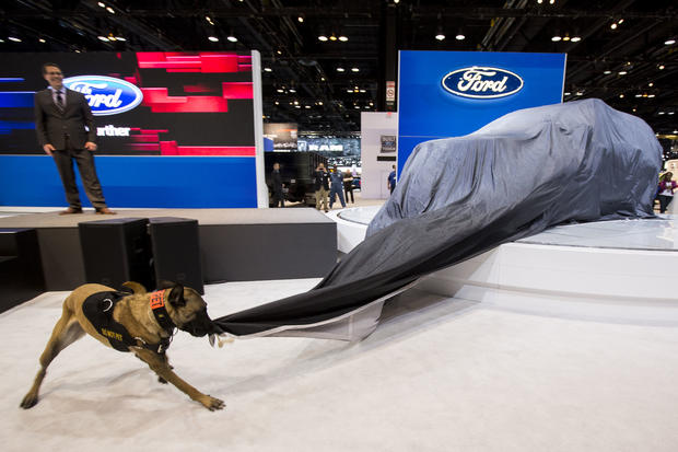 Keegan, a Belgian Malinois, unveils the 2016 Ford Police Interceptor Utility vehicle during the media preview of the Chicago Auto Show at McCormick Place in Chicago Feb. 12, 2015.