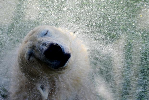 Polar bears get their special day