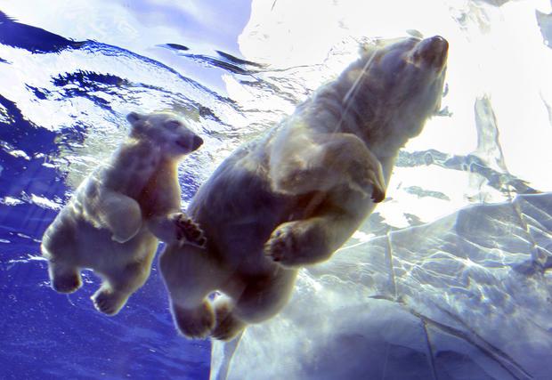 polar-bears01getty.jpg