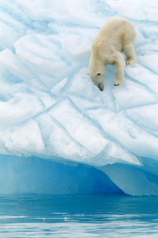 polar-bears28istock.jpg