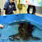 south-carolina-aquarium-sea-turtle-rescue-program-leatherback-sea-turtle-march-2015-65.jpg