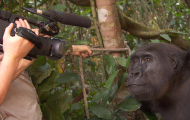 Face-to-face with gorillas