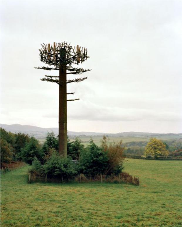 robert-voitnew-treescocke-436x550.jpg