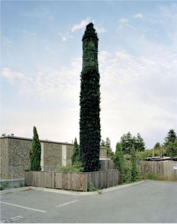 robert-voitnew-treessanta1-436x550.jpg
