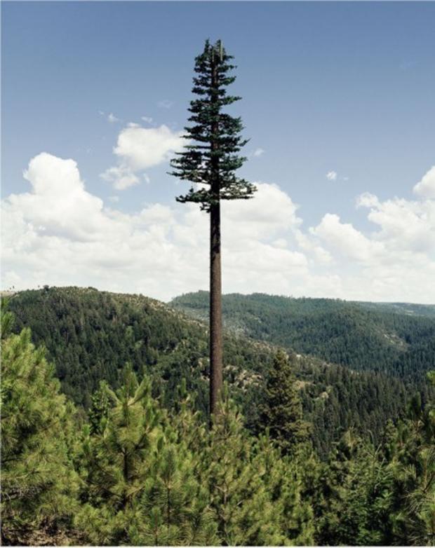 robert-voitnew-treesmono-436x550.jpg