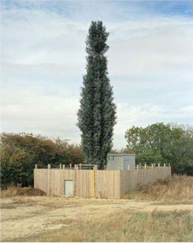 robert-voitnew-treesrisel-436x550.jpg