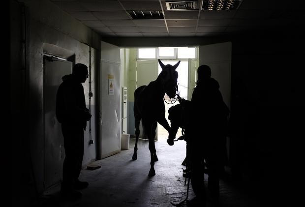 Inside Istanbul's horse hospital