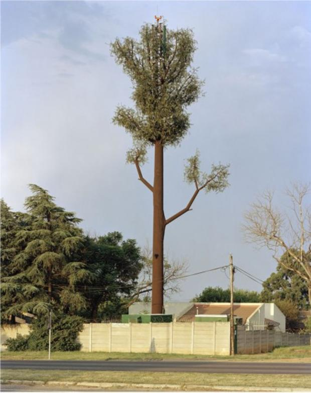 robert-voitnew-treesnorsc-436x550.jpg