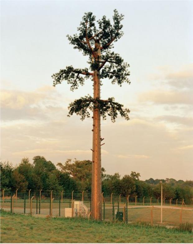 robert-voitnew-treescuckf-436x550.jpg