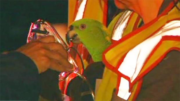 parrots2.jpg