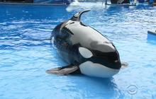 SeaWorld hopes to turn the tide after negative publicity