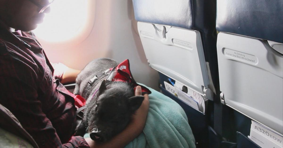 How Airline Passengers Game Emotional Support Animal