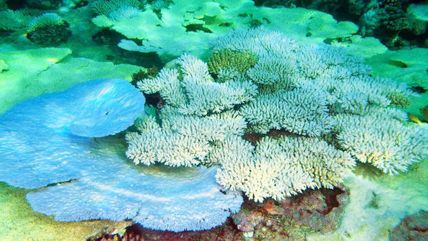 Coral bleaching hits Indian Ocean reefs