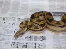 snake-5.jpg