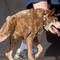 ugliest-dog-2015-ap809105623694.jpg