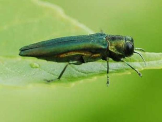 eab-adultd-west-300x225.jpg