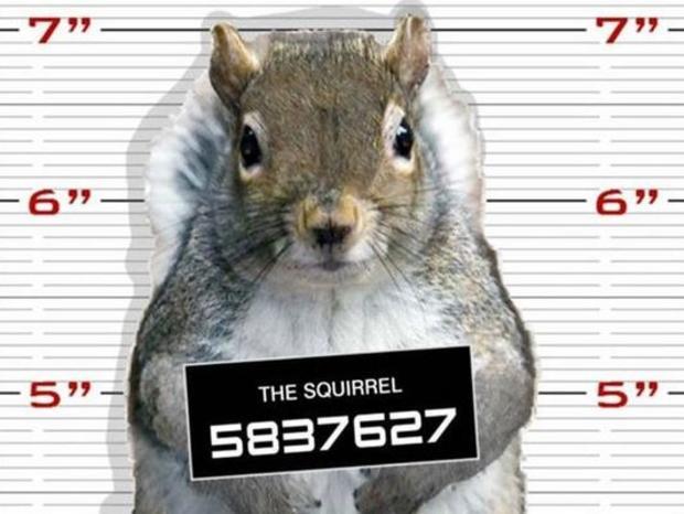 squirrel-mugshot.jpg