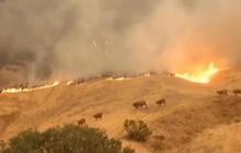 Hundreds evacuated as California wildfire threatens wine country homes
