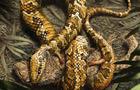 4-legged-snake-1.jpg
