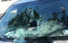 Bear trapped in car breaks windshield to escape, defecates