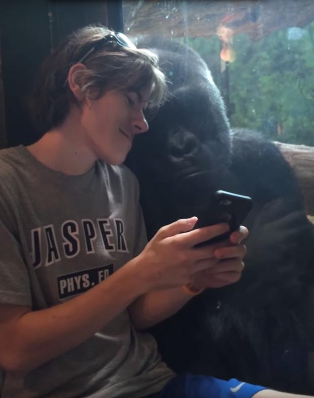 gorillaphonephotos.png