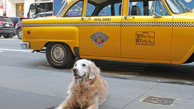 Last 9/11 search dog has died