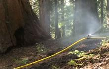 Firefighters set sprinklers on Sequoias to protect against wildfire