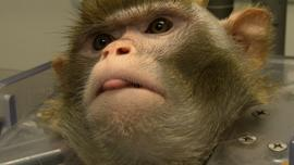 ctm-glor-monkey-face-duke-brains.jpg