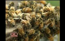What's Wrong with the Bees?