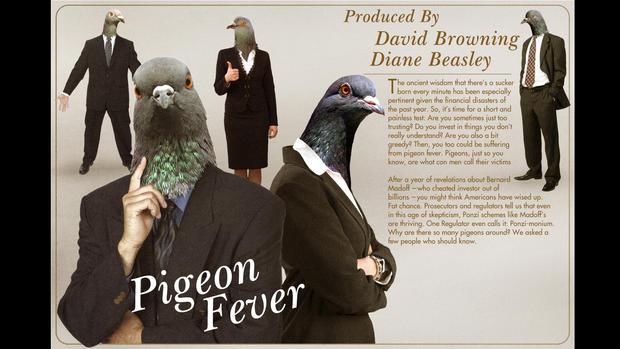 pigeonformatted.jpg