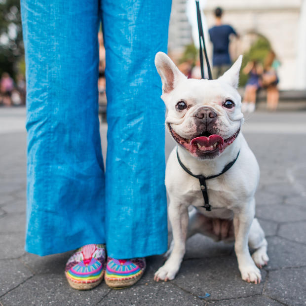 dogist-pearl-french-bulldog-5595.jpg