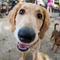dogist-radley-goldendoodle-5416.jpg