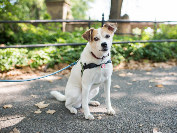 dogist-lucy-beagle-jack-russell-mix-5014.jpg