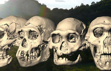 Evolution revolution: New discovery may rewrite human history
