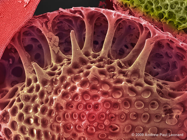 Nature's building blocks up close
