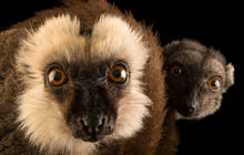 Joel Sartore's Photo Ark