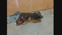 EN VILLAFRANCA HATE CRIMES 110715