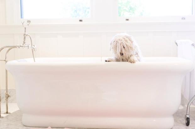 beast-bath-time.jpg