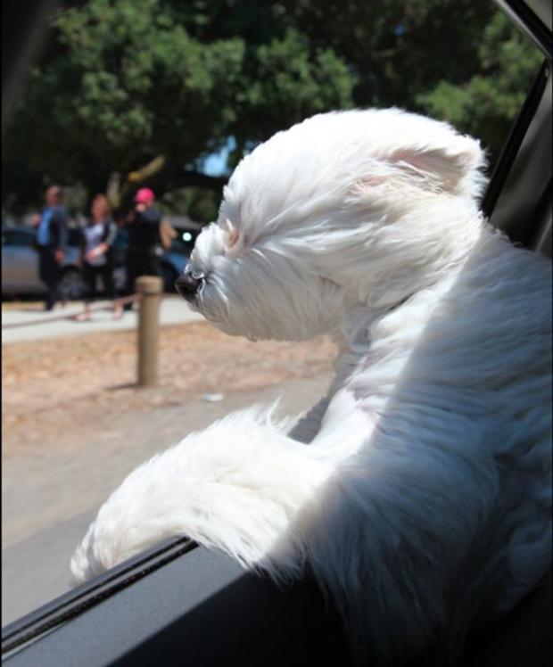 beast-car-window.jpg