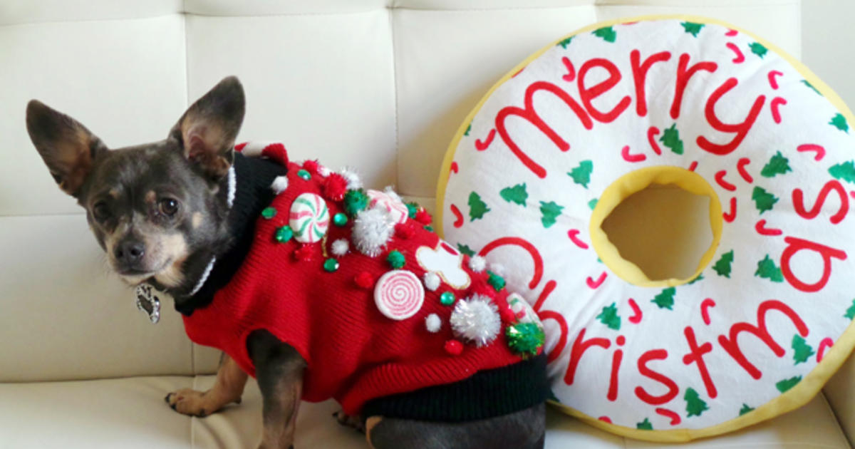 Christmas Sweaters For Dogs.Ugly Christmas Sweaters A Holiday Tradition For Cats Dogs
