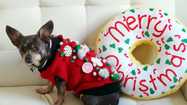 ugly christmas sweaters a holiday tradition for cats dogs too cbs news
