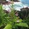 odontonema-aliciaemicroscopic-image-new-flowering-plant-from-panamac-alicia-ibanez.jpg