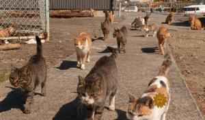 From 2016: Cats take over Japanese island