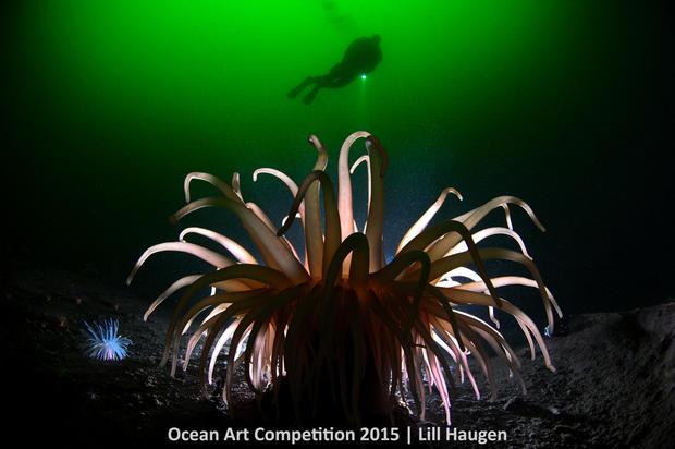 1st-c-ocean-art-2015-lill-haugen-1200.jpg